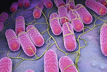 Précon Quality Services - Nieuw: korte e-learningmodule over de Listeria monocytogenes